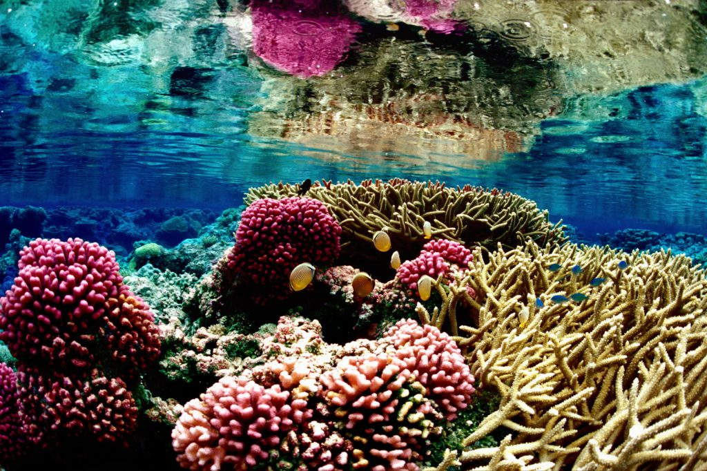 """Coral Reef at Palmyra Atoll National Wildlife Refuge."" Credit: USFWS - Pacific Region (Flickr) (CC BY 2.0)"