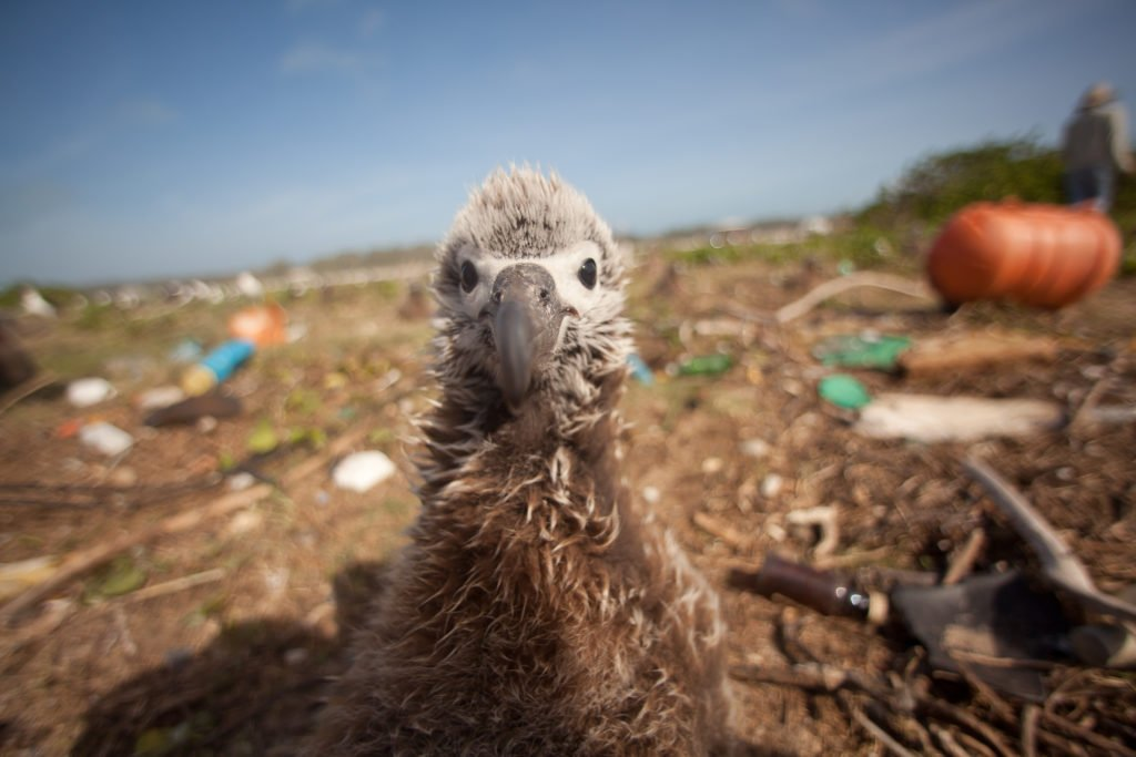 Seabird surrounded by plastic