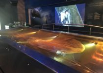 Colossal squid 2